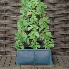 Pea, Bean and Climbing Plants Patio Planter from Haxnicks, easy to use and ideal for growing peas, beans and other climbing plants and flowers in any garden Growing Vegetables In Pots, Easy Vegetables To Grow, Vegetable Garden Design, Garden Tools, Fruit Trees In Containers, Growing Peas, Growing Fruit Trees, Runner Beans, Patio