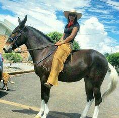 Cool markings on this mule