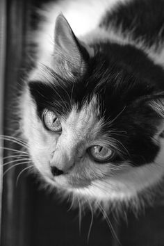 Captive by Mihnea Trusca on White Eyes, Feral Cats, Cat Photography, Domestic Cat, Monochrome, Black And White, Pictures, Friends, Beautiful