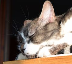 Sleeping cat Blood Drop, Cortisol, Nest, Sleep, Pictures, Animals, Nest Box, Photos, Animales