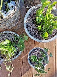 Kuunliljoja ja muratteja
