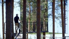 How to Build an Invisible Tree House   World's Strangest   Discovery Science