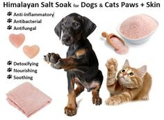 Himalayan Salt Soak Recipe for Dogs, Cats Paws, Skin – Soothe, Calm Himalayan salt soak (sole) can help soothe your dogs and cats sore, inflamed, irritated or infected paws and skin. Himalayan salt soaks are also calming.   Also called 'pink gold', pink Himalayan salt is an organic 'full spectrum' salt with many health promoting properties, due to its mineral, element, and electrolyte-rich composition.  Himalayan salt contains 71% of all natural elements (electrolytes, elements and…