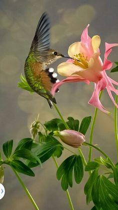 Splendid! Hummingbird RT@WorldSoulAwaken http://t.co/GLzRdb03s1