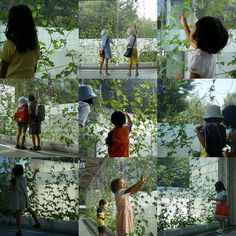 botanical #installation ASAGAO cyrcle project w/ #kids #exhibition in 2001 #summertime at nagoya city science museum #ar7zwork #cyrcleobject #wirehanger #morningglory #snapshots #tactomase