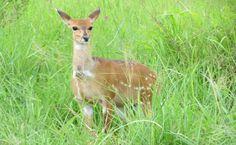 Parc national du Serengeti Parc national du Serengeti vol - Wild ...