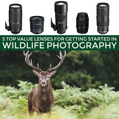 If you are just getting into wildlife photography but don't want to break the bank - here are 5 excellent value lenses for you to consider purchasing. For more photo tips & tricks, visit http://robflorexplore.com