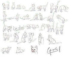 cats poses referenceseificopperdeviantart on