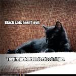 black cats are ninjas