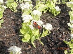 ► Butterfly on flower ◄