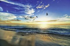 UtArt: Strand Möwen Meer Sonnenuntergang - Bild auf Alu-Verbundplatte