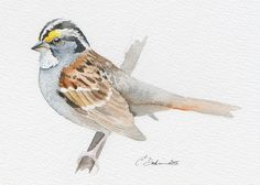 "White-Throates Sparrow 5 x 7"" Original Watercolor painting (unframed) bird. Fits standard frame."