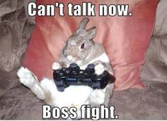 funny animals with captions   Funny animal pictures with captions, animal caption pictures, funny ...