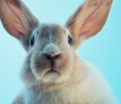 Bunny / Animals / Wallpy - Beautiful Pictures