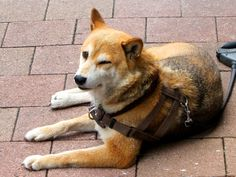 back view dog - Google 검색