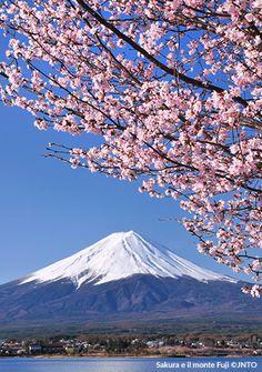 Il fiore del ciliegio, simbolo del Giappone - Repubblica Viaggi
