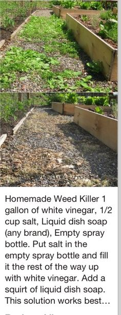 Weed killer: trying this