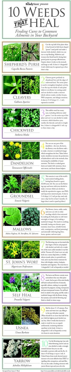 10 Weeds That Heal - rugged-life.com  may have to view the previous page to find this