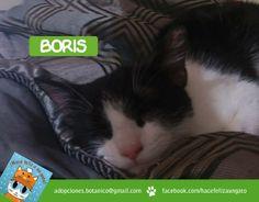 Boris sólo sale quieto en las fotos cuando duerme lo único que quiere es jugar con Juan todo el día! ¡Gracias Juan por adoptarlo!