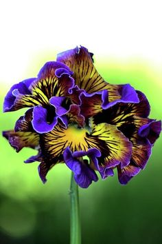 Purple and Yellow Fr Beautiful gorgeous pretty flowers