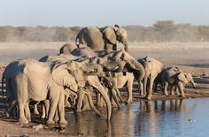 Peregrinate around the world with these awe-inspiring safari destinations that should be on your bucket list. Safari Adventure, African Elephant, Wildlife Photography, National Parks, Around The Worlds, Creatures, Elephants, Destinations, Bucket