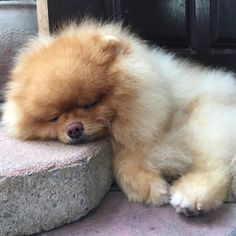"727 Likes, 6 Comments - Kaosoy Plachon (@kaosoyandplachon) on Instagram: ""Life is too hard.. LoL """