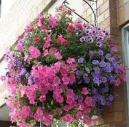 Image result for monochromatic flower baskets