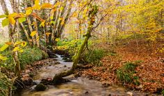 Fall Creek / Ruisseau d'automne by Didier Vacher on 500px