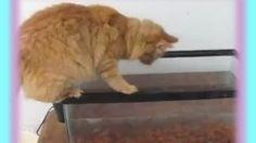 Clumsy Cat Falls Into Fish Tank, via YouTube.