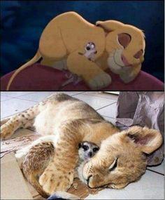 real-life Simba and Timon