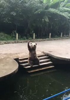 Funny Animal Videos, Funny Animals, Cute Animals, Wild Animals, Funny Meme Pictures, Cute Pictures, Puppy Meme, Meanwhile In Russia, Russian Humor