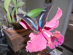 orchid and butterfly