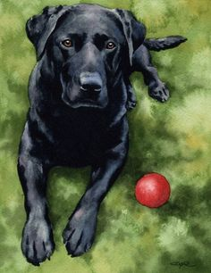 BLACK LAB Art Print Signed by Artist DJ Rogers by k9artgallery