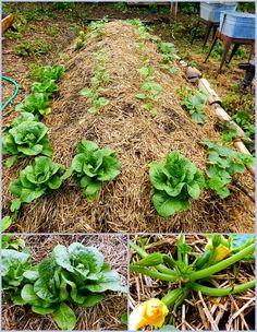 How-to: Hugelkultur Raised Garden Bed Start to Finish