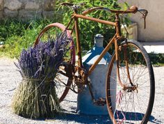 Love this little shot of the saffron colored rusty bike and the bundle of lavender! Very French...