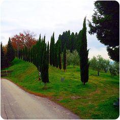 Unterwegs in Lajatico.  https://www.facebook.com/EssenReisenLeben #EssenReisenLeben #Lajatico #Chianni #Toskana #Tuscany #Toscana #Dezember #Dicembre #Ferien #Urlaub #lacasadelpittore