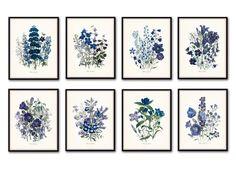 Fleurs De Jardin Print Set No. 8 - Botanical Print Set