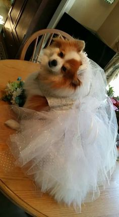 Getting married follow me on pet clothing online fb