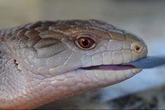 Related image Snake, Animals, Animales, Animaux, Snakes, Animal, Animais