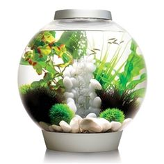 The BiOrb Classic 30 Liter Silver Aquarium w/ LED combines classic good looks with high tech filtration. Most aquariums use small box filters and/or smooth gravel which easily clogs with dirt. Like all biorbs, the biOrb 30 uses special ceramic media to Biorb Aquarium, Aquarium Kit, Acrylic Aquarium, Traditional Bowls, Airstone, All Fish, Tropical Aquarium, Animal House