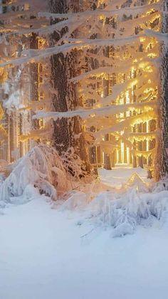 I love winter's soft light