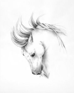 ORIGINAL Charcoal Drawing White Horse Art Wild by JaclynsStudio