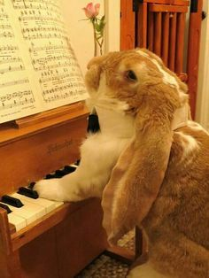 Bunny Playing Piano