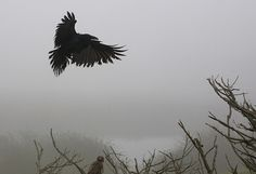 crow and hawk | Flickr - Photo Sharing!