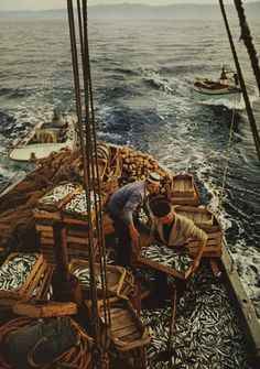 Beautiful vintage photograph of an old sardine fishing boat filed with fish / unknown photographer
