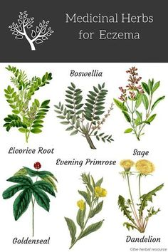 Information on the Health Properties, Active Substances, Benefits and Side Effects of Medicinal Herbs for Eczema Treatment and Relief Natural Health Remedies, Natural Cures, Natural Healing, Herbal Remedies, Holistic Remedies, Natural Hair, Magic Herbs, Herbal Magic, Healing Herbs