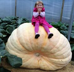 Little Girl and Big Pumpkin !