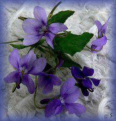 Simple Flowers, Beautiful Flowers, Wild Flowers, Pansy Tattoo, Flower Symbol, Flower Cart, Sweet Violets, Small Bouquet, All Things Purple