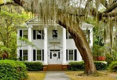 I love plantation houses and weeping willows.