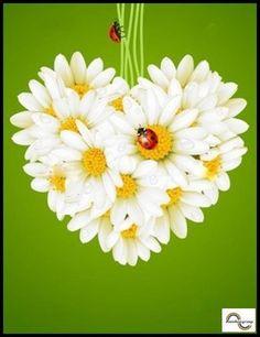 Daisy heart with ladybugs.